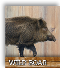 wild boar slices